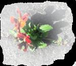 Glans bloem